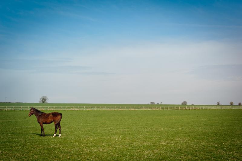 horses-5